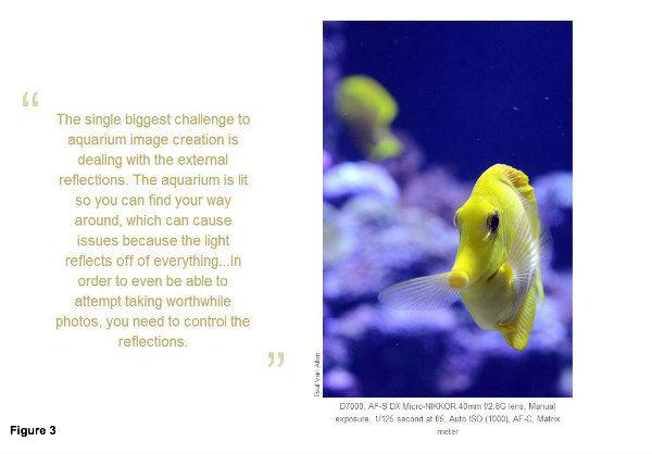 aquarium image-Nikon