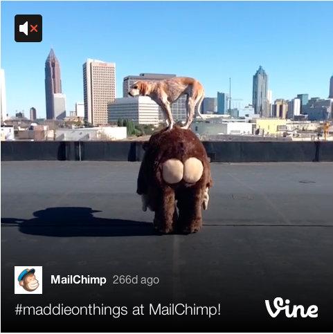 mailchimp dog-vine