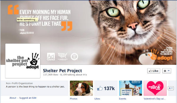 cat face -shelter pet project