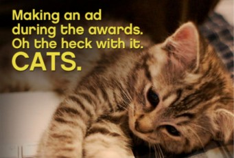 cat picture-making an ad
