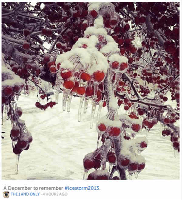 Storify example-frozen berries on tree