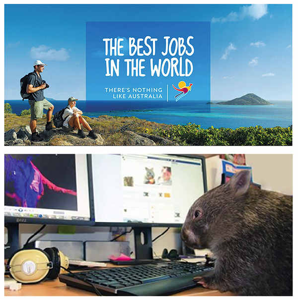 animal at keyboard-best jobs example