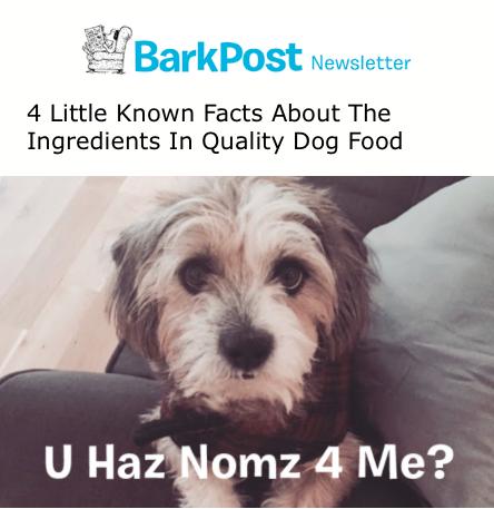 BarkPost- newsletter-image 5
