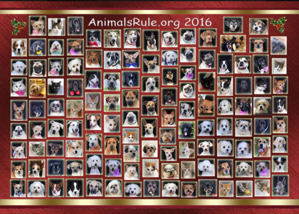 animals-rule-facebook-page