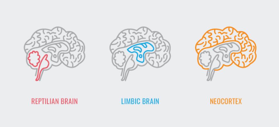 limbic-brain